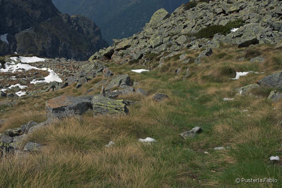 Il sentiero in alta valle