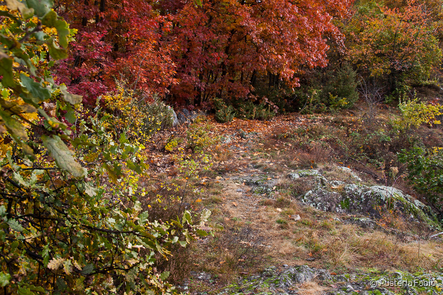 Colori del bosco